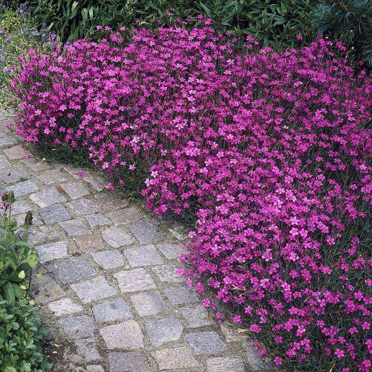 All Season Perennial Garden Plans