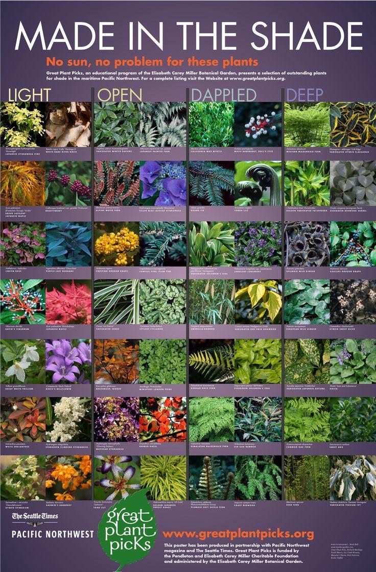 Best Garden Plants for Shade