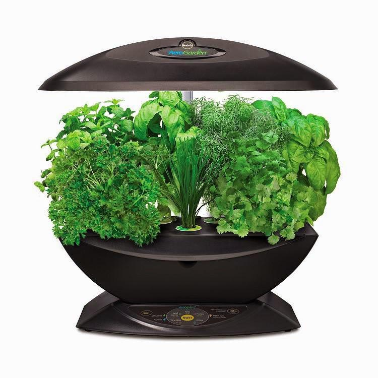 Best Herbs for Indoor Herb Garden