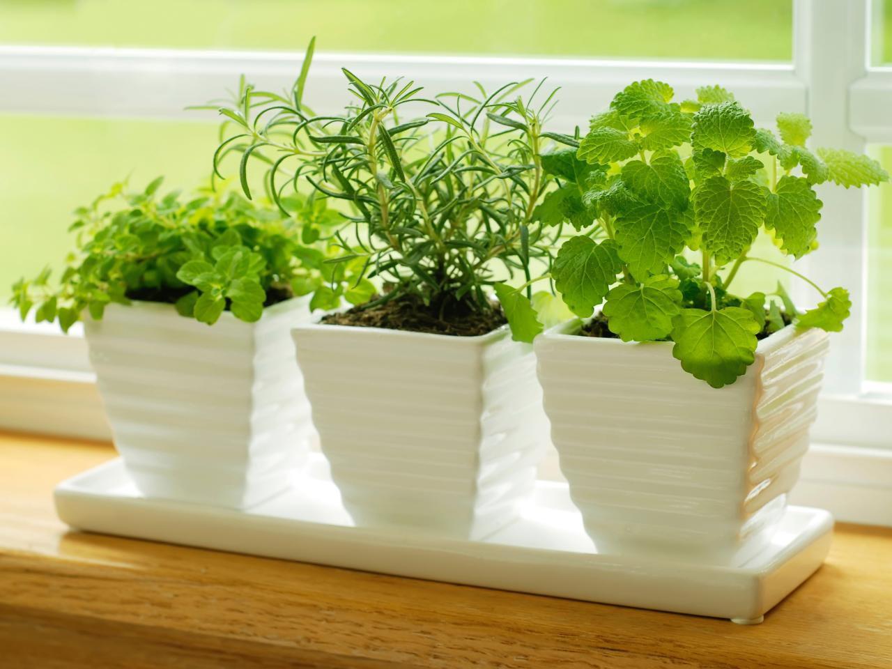 Best Herbs for Kitchen Garden
