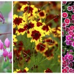 Best Long Blooming Perennial Flowers