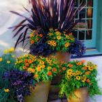 Best Low Maintenance Plants for Patio