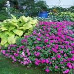 Best Plants for Shade Garden