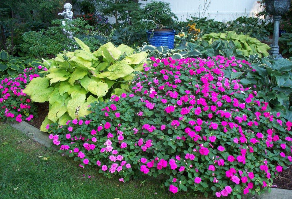 Best Plants for Shade Garden