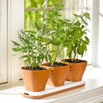 Best Pots Indoor Herb Garden