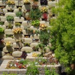 Best Succulents for Vertical Garden