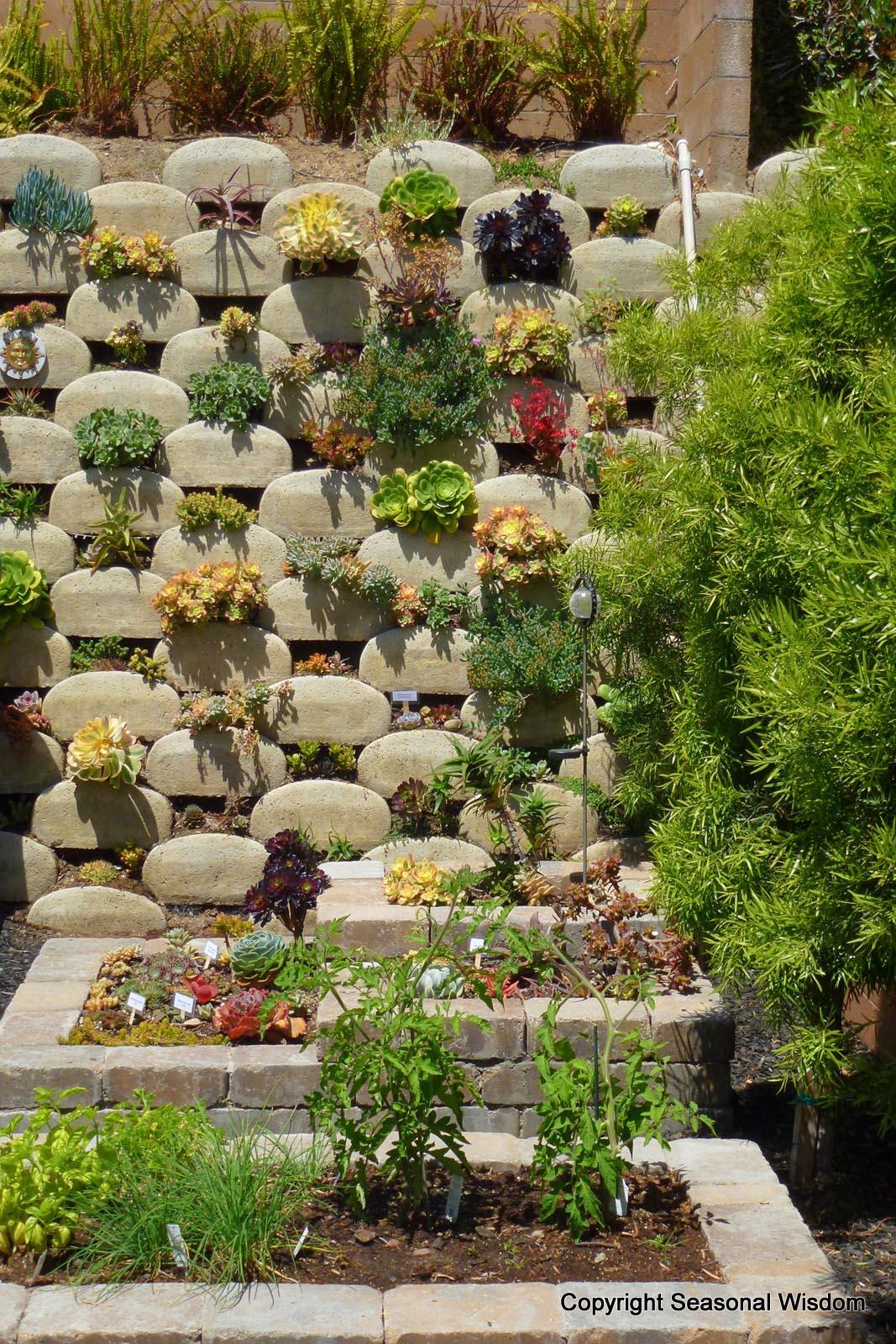 Best Succulents for Vertical Garden