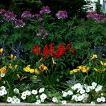 Border Flower Garden Plans