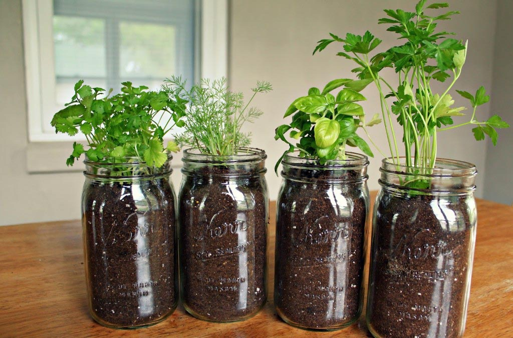 Build Your Own Indoor Herb Garden
