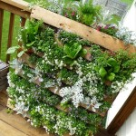 Building a Patio Herb Garden