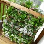 Building a Patio Herb Garden