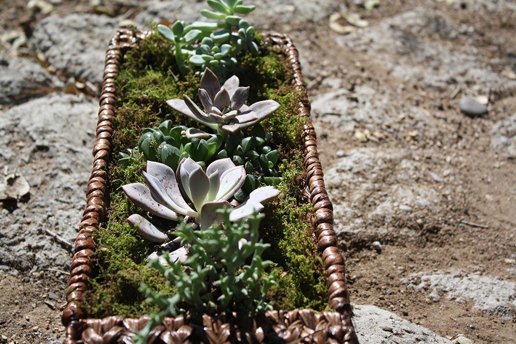Building a Vertical Succulent Garden
