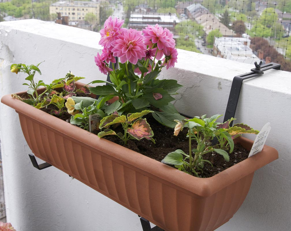 Building an Herb Garden Box