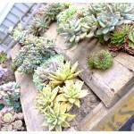Building Vertical Succulent Garden