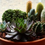 Cactus and Succulent Container Gardens