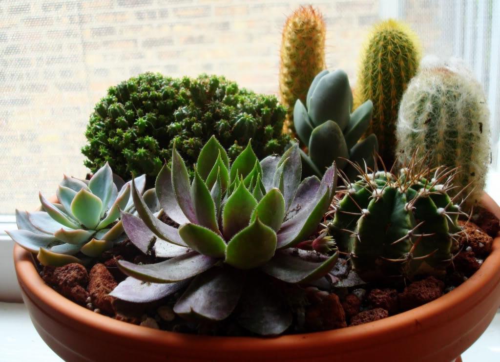 Cactus and Succulent Container Gardens