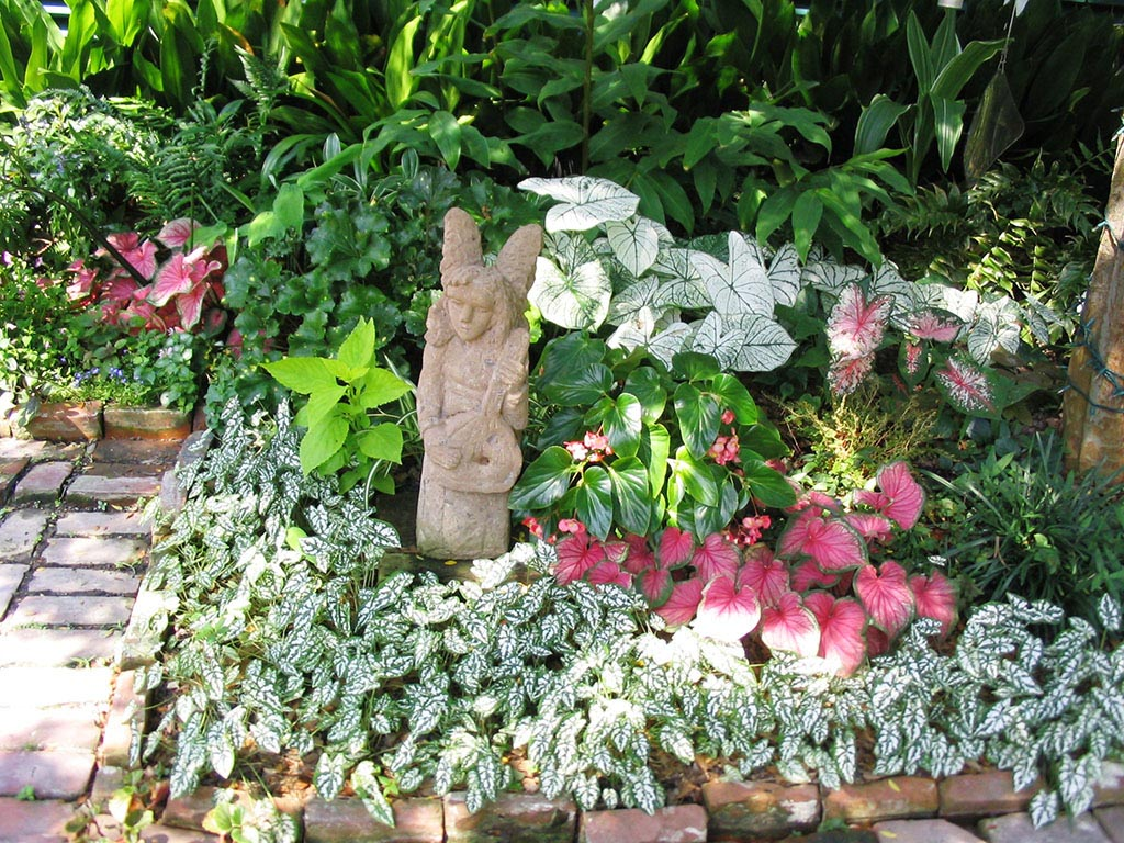 Colorful Plants for Shade Gardens