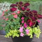 Container Gardening Shade Plants