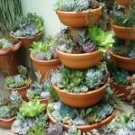 Container Gardening Succulent Ideas