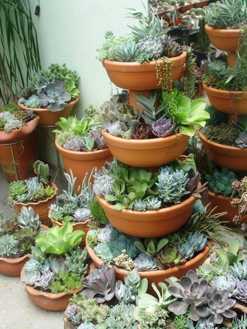 Container Gardening Succulent Ideas Garden Design Ideas