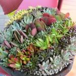 Container Succulent Gardening Ideas
