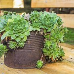 Containers for Succulent Gardens