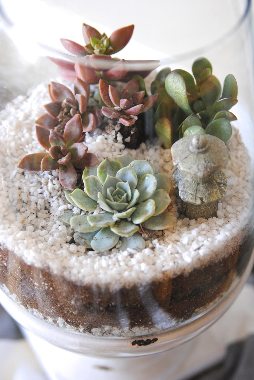 Create Indoor Succulent Garden