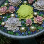 Creating a Succulent Container Garden