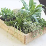 Creating a Vertical Succulent Garden