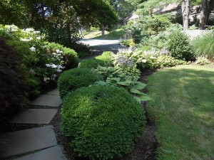 Deer Resistant Plants for Shade Garden