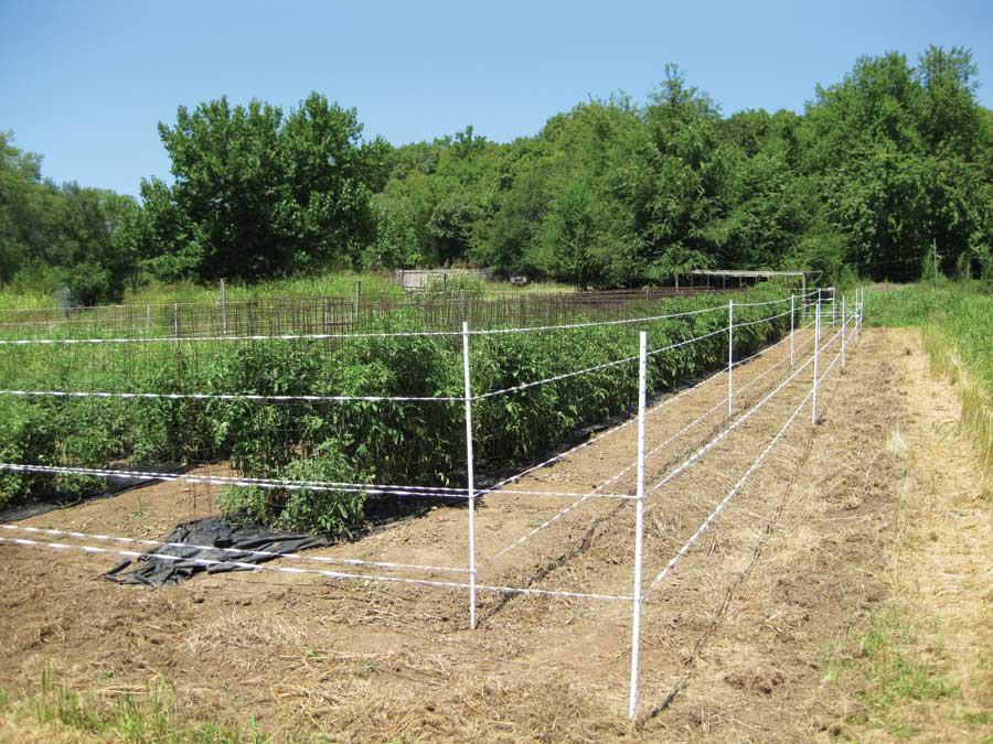 DIY Electric Fence Garden