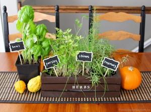 DIY Herb Garden Indoor