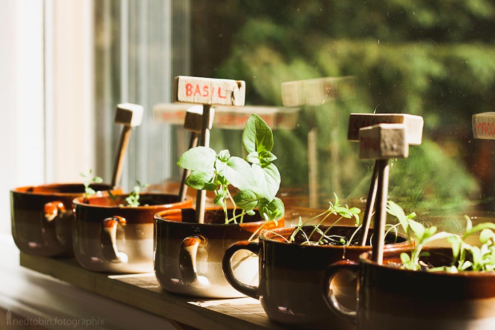 DIY Windowsill Herb Garden