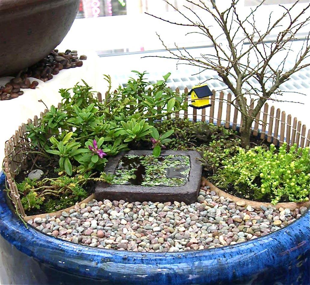 Dwarf Plants for Fairy Gardens