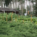 Electric Fence for Vegetable Garden