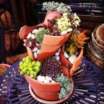 Fairy Garden Flowers and Plants