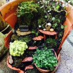 Fairy Garden Ideas in a Pot