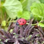 Fairy Garden Miniature Animals