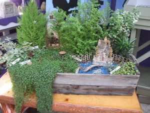 Fairy Garden Miniature Plants