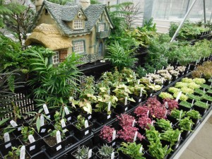 Good Plants For A Fairy Garden Garden Design Ideas