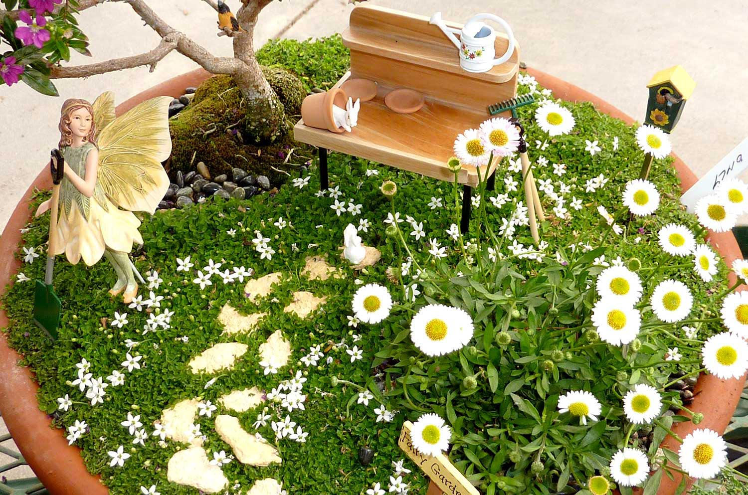 Fairy Garden Plants Ideas