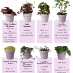 Fairy Garden Plants List
