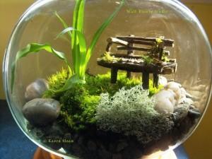 Fairy Garden Terrarium Plants