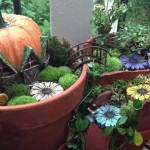 Fairy Gardens in Containers