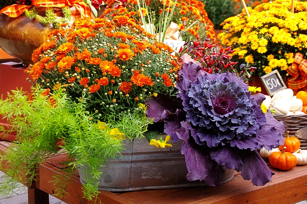 Fall Flower Garden Plan