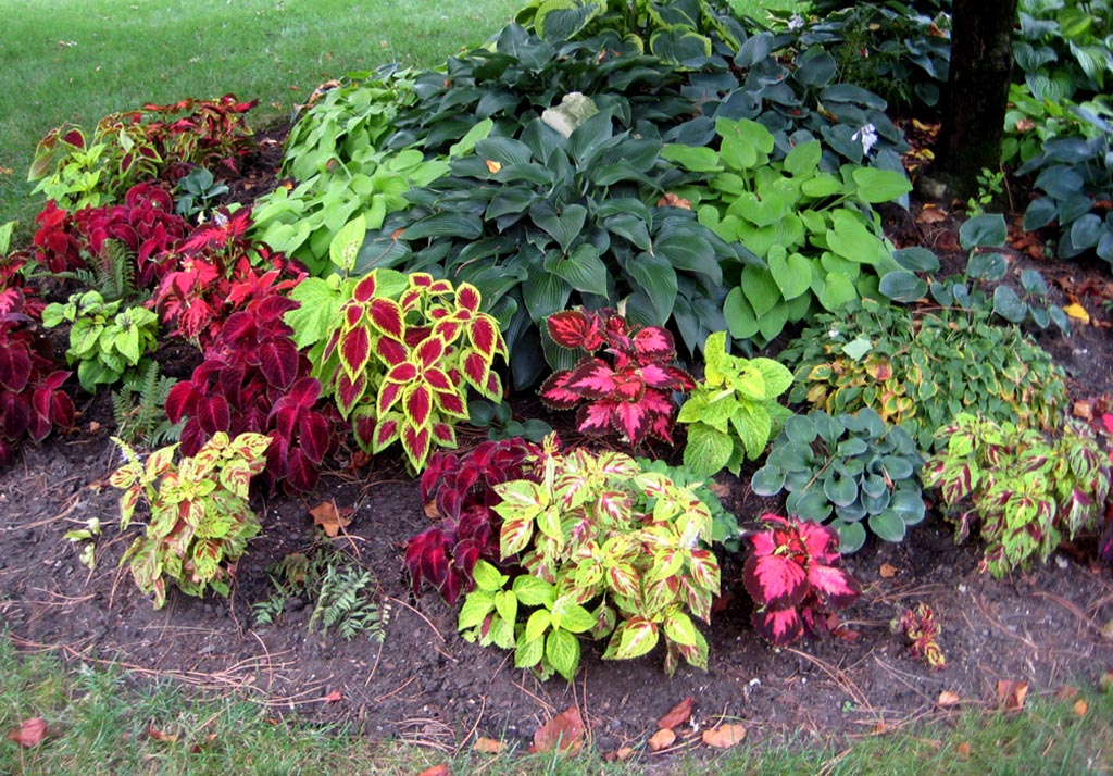 Flower garden plans zone 4 garden design ideas for Outdoor flower garden design