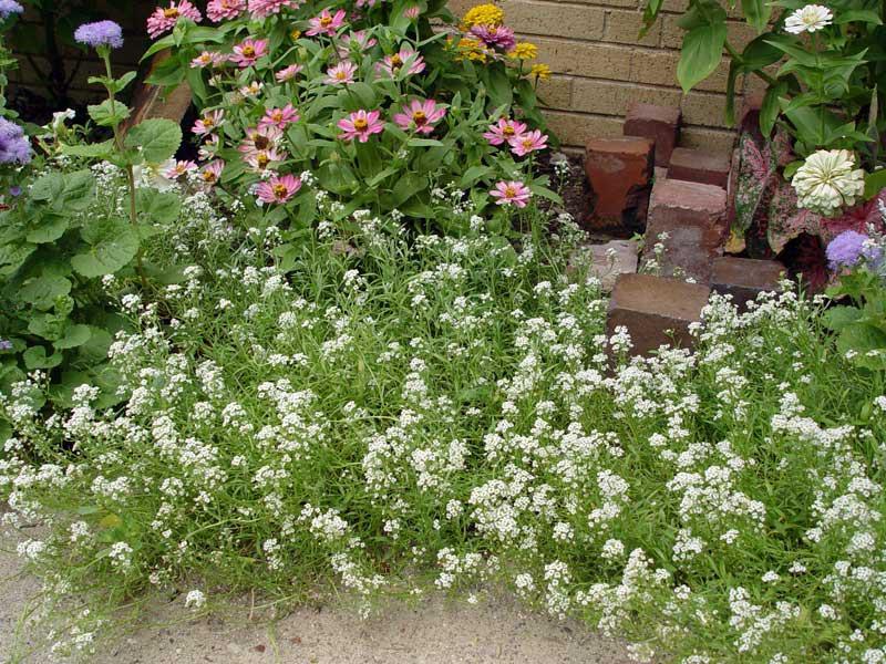 Full Shade Garden Plants