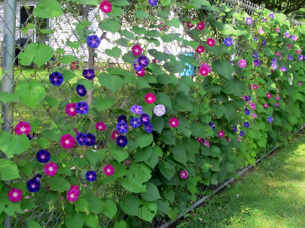 Garden Chain Link Fencing Kit