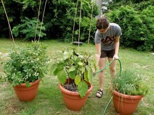 Garden Herbs in Pots