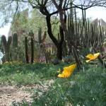 Green Door Fairy Garden Stellenbosch